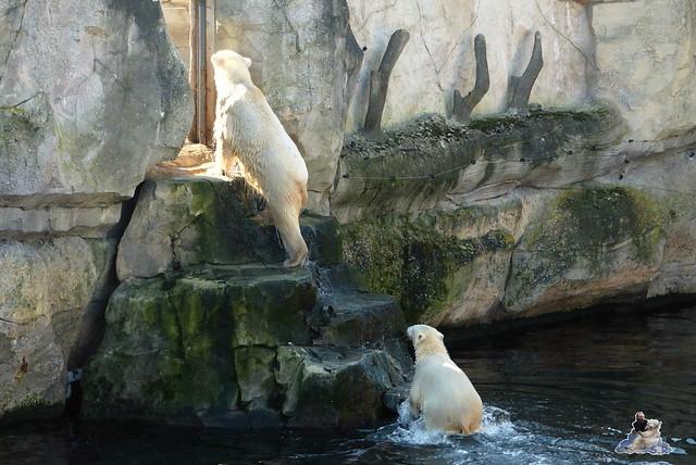 Zoo am Meer 08.03.2015  197