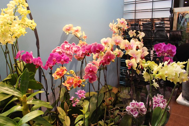 home-show-orchids