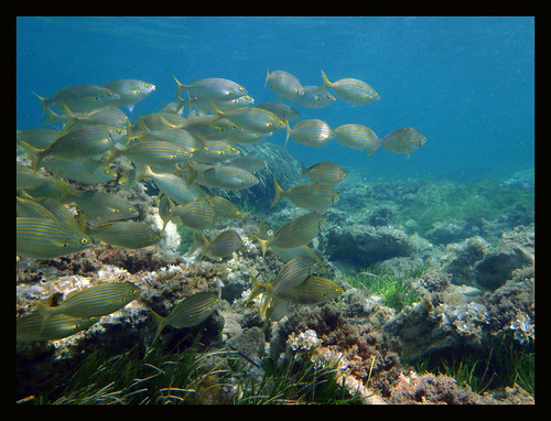 snorkel en Murcia - españa
