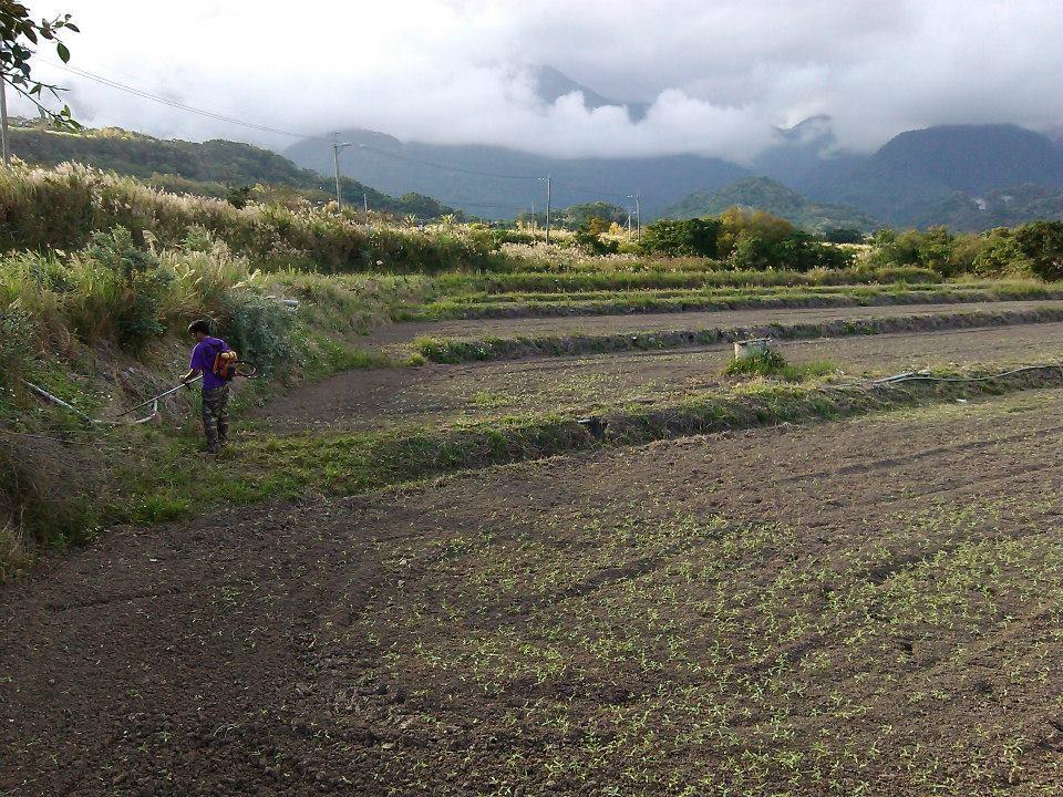 2014年11月,Acaw把抽水馬達修好了,正在砍草