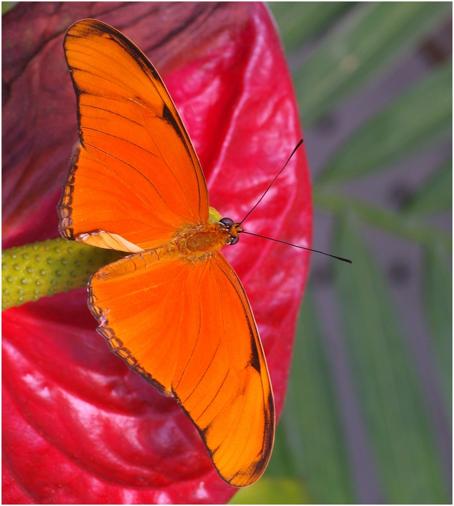 Papillons en Fêtes 2015 16825228789_bf6ecff709_o