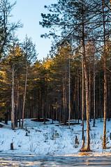 Spring forest | Весенний лес
