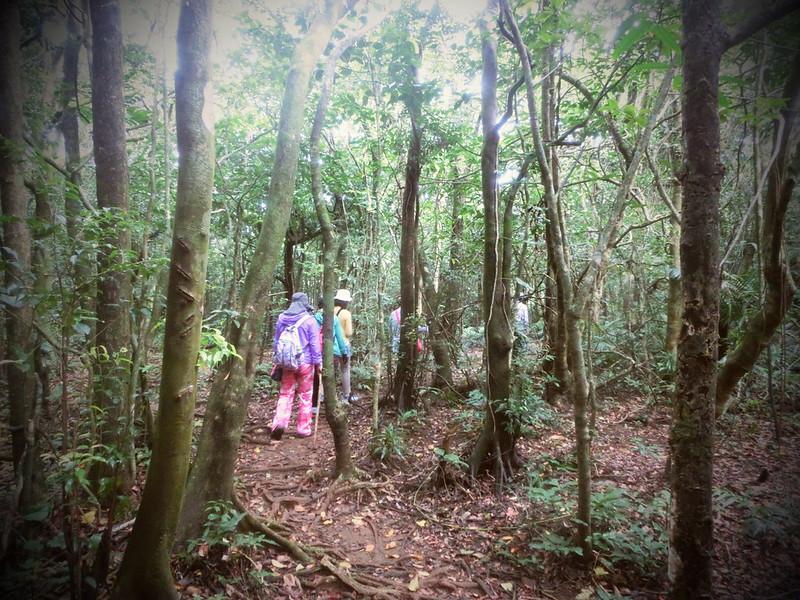 17度C隨拍-祕境介紹-台灣蘭嶼-天池 (30)