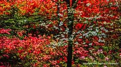 Kodachrome Landscape