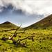 Mouflon  sheep by eye of einstein