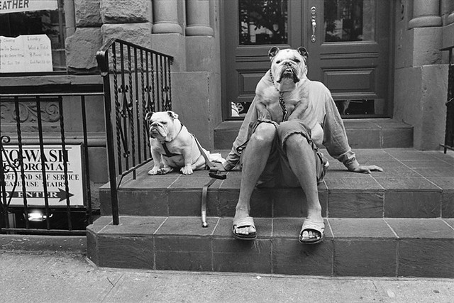 Elliott Erwitt Dogs