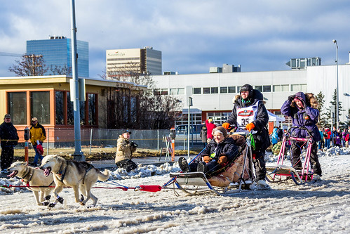 Iditarod Start, 2015