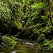 Makirikiri Stream, Paparoa Range, West Coast by New Zealand Wild