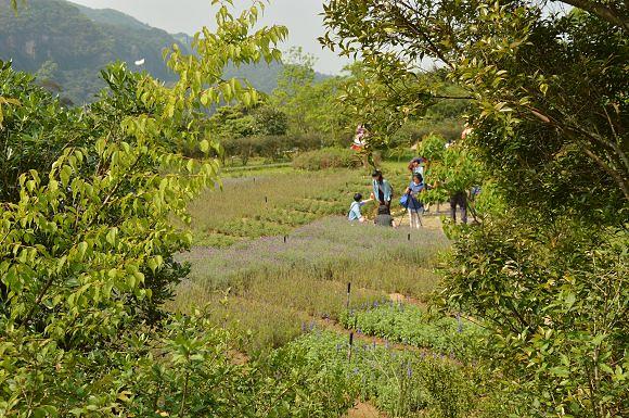 內雙溪自然中心23
