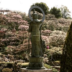 ume @ nakayama-dera #梅 #中山寺 #兵庫 #ume #nakayamadera #hyogo #japan