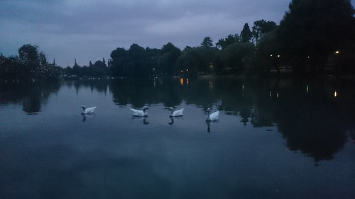 sunset lake dusk ducks johannesburg zoolake