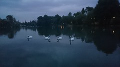 I got my ducks in a row!