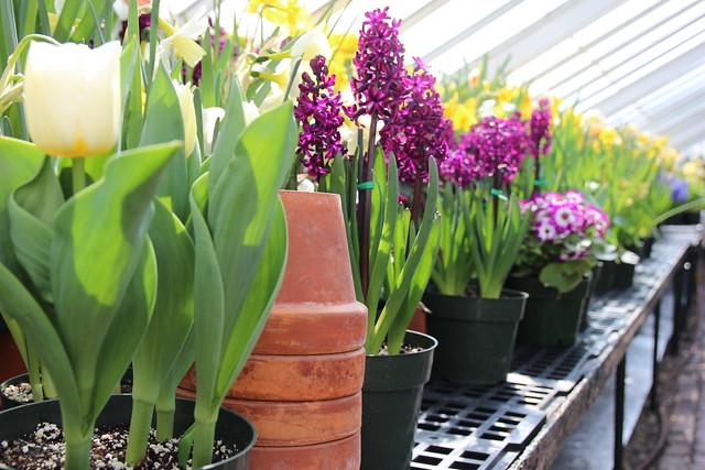 Spring Flower Show 2015