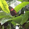 Escaping a rainy cold day in the Tropical Butterfly House.