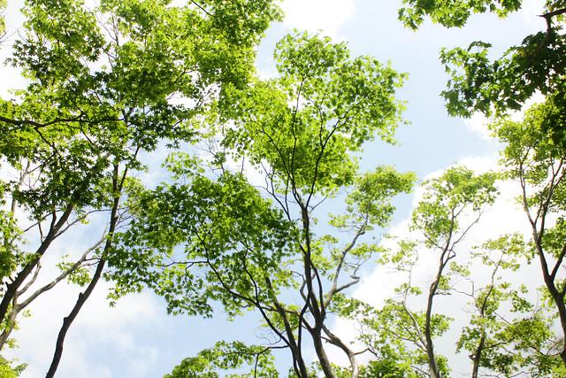 2014-05-24_00143_鍋割山.jpg