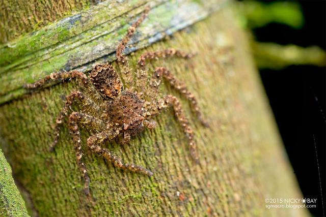 Huntsman spider (Sparassidae) - DSC_3745