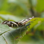 Sa, 21.03.15 - 14:30 - Schmetterling