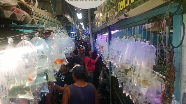 Mexico fish market