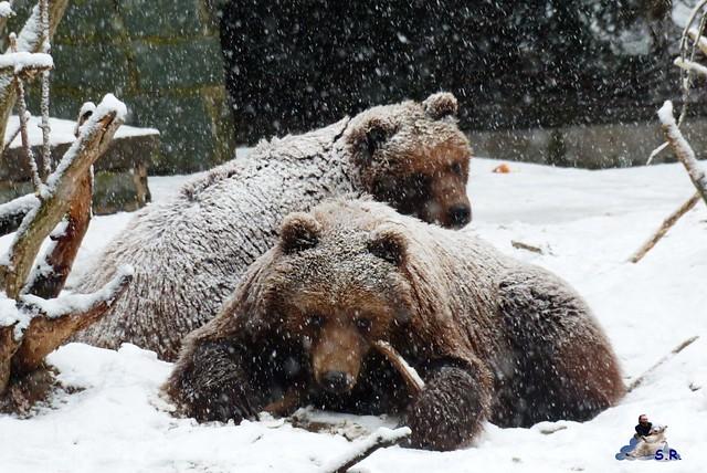 Eisbär Taufe Fiete Zoo Rostock 31.03.21015 8