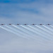 Small photo of Line Abreast