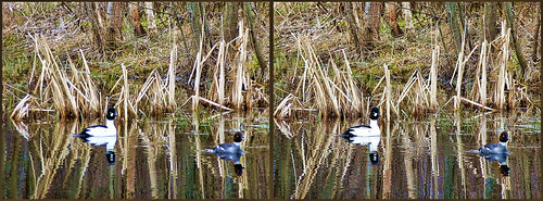 ... Goldeneye ... 3D cross-view ...