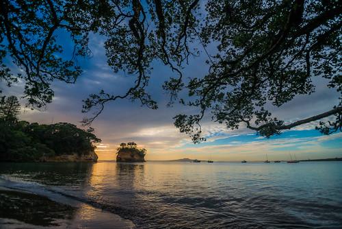 newzealand beach sunrise bay auckland northshore nz pohutukawa waiake eastcoastbays