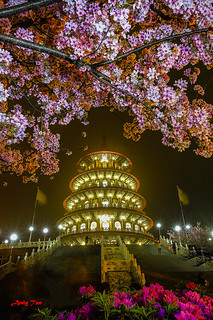 Cherry Blossom at Tian Yuan Temple