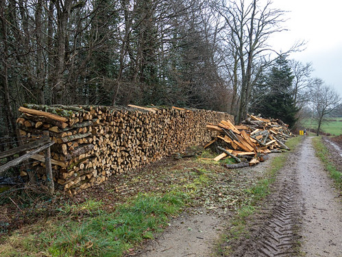 The firewood