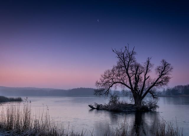 дерево на маленьком островке