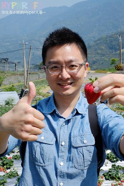劉正男高冷草莓園  (37)