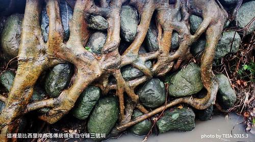 前人砌石做圳,留下好的樹,讓樹根保護石牆,經歷多少地震颱風洪水...他們已經存在一百年,就像當年他們被做好時候的樣子,我們還有沒有遠見,讓她繼續存在下一個百年?圖片來源:TEIA農貓學田