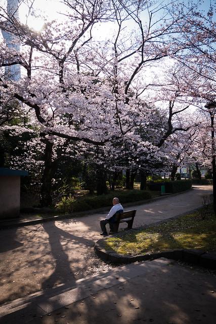 Sakura - Japanese Life