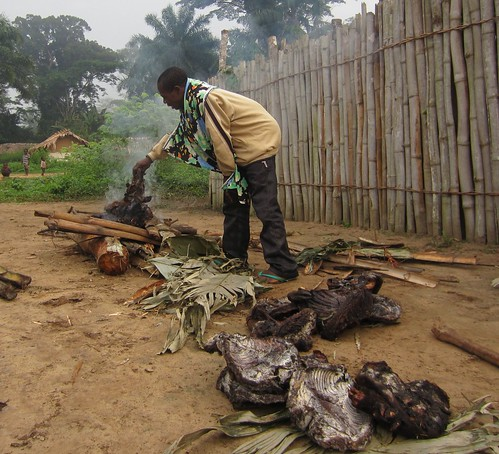Hunter puts his bonobo bushmeat in the flames