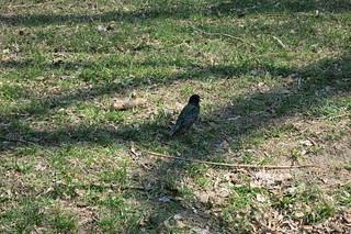 Кто знает, что за птичка?