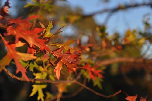 1N Autumn leaves 07