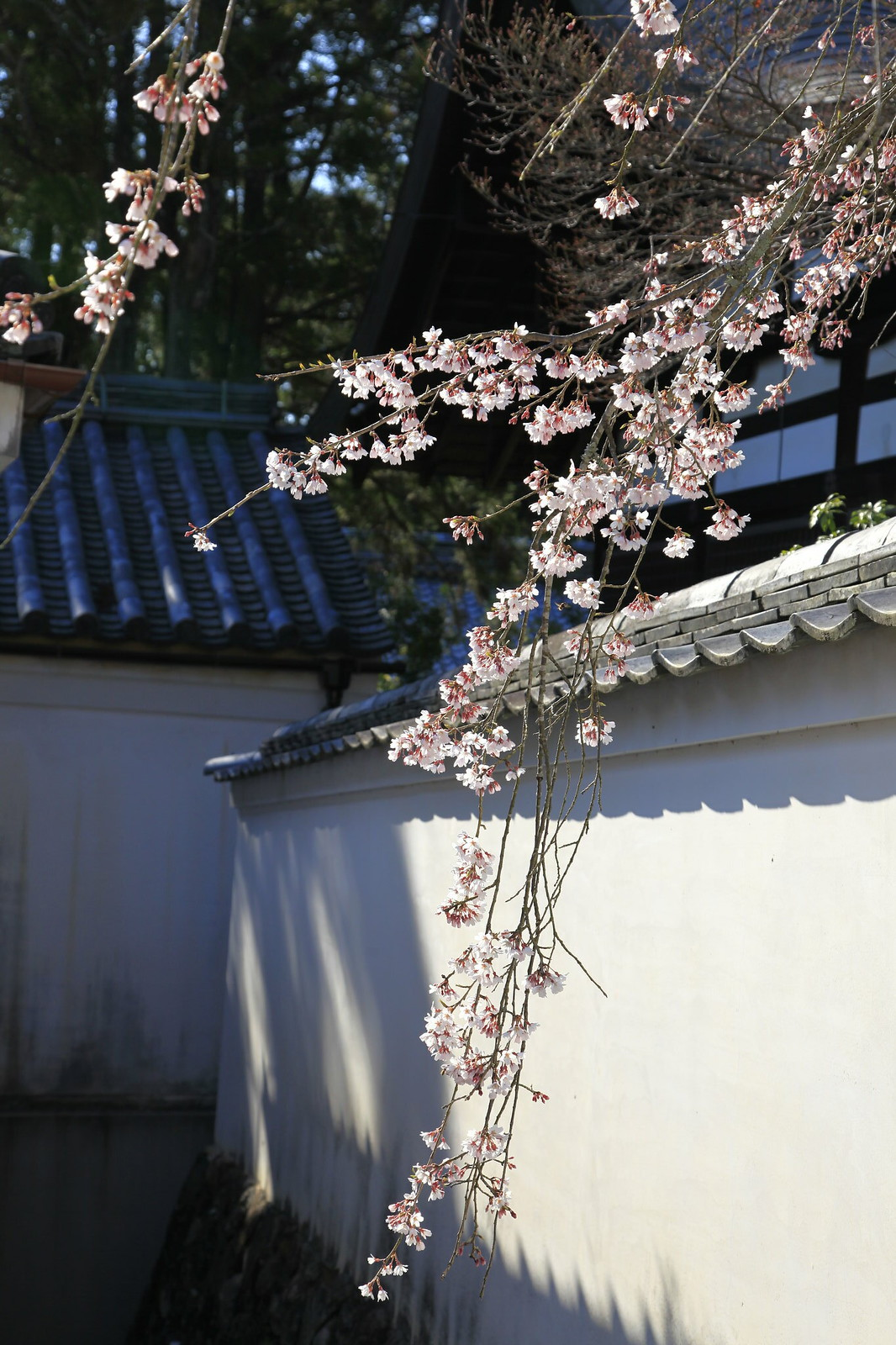 京都三日自由行