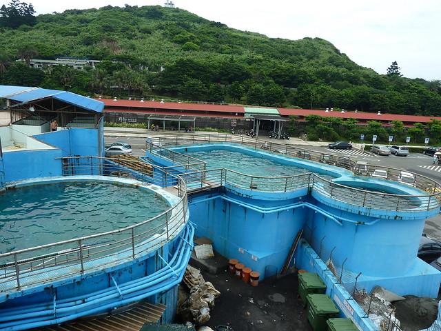 野柳海洋世界目前有11隻海豚,分別被養在一個表演池與六個飼養池中,空間最大的表演池,長僅約25公尺、寬16公尺,水深更只有3公尺;其他飼養池都非常小,水深都是3公尺。所有海豚經年累月只能在窄小的水池裡繞圈圈。(圖文:台灣動物社會研究會)
