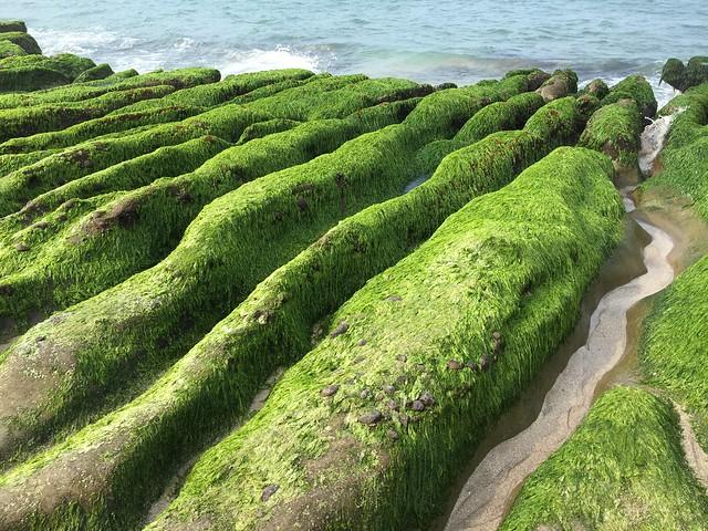 好美的老梅綠石槽