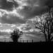 black trees by Stephan Harmes