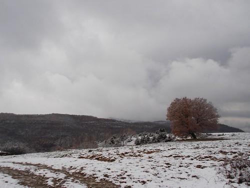 χιόνια δέντρο χειμώνασ συννεφιά χρυσάφύλλα