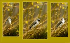 Some Birds