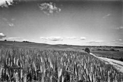 Everyday the same landscape...;-)