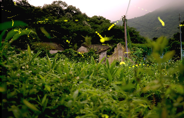 Photo:螢 By tf.eric0210