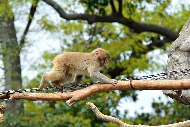 上野動物園_サル