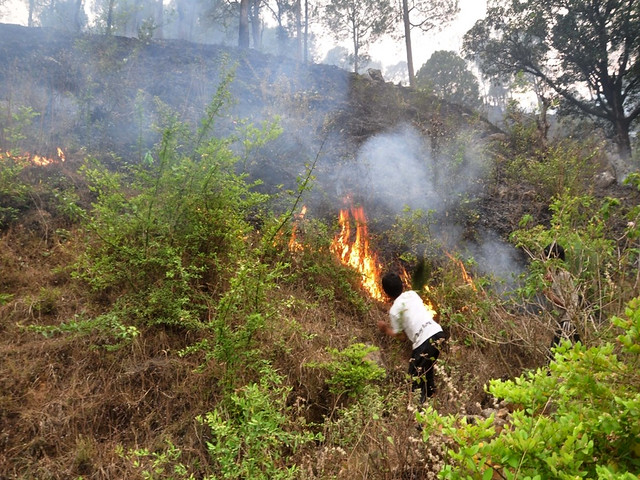 उत्तराखण्ड के जंगलों में आग लगना एक विकट समस्या है