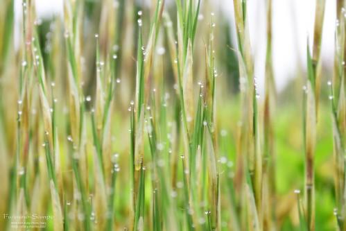雨のあと。20160625-IMG_1405