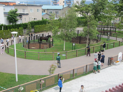 函館競馬場のふれあいパドック