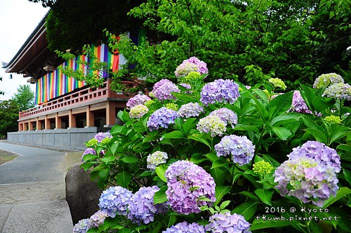 2016智積院 (8).JPG