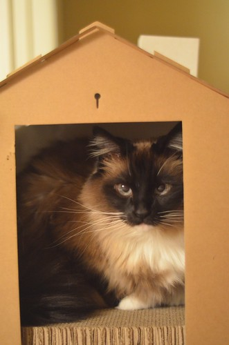 Cat House Revisited