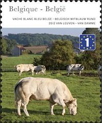 20 Belgische Streken timbred